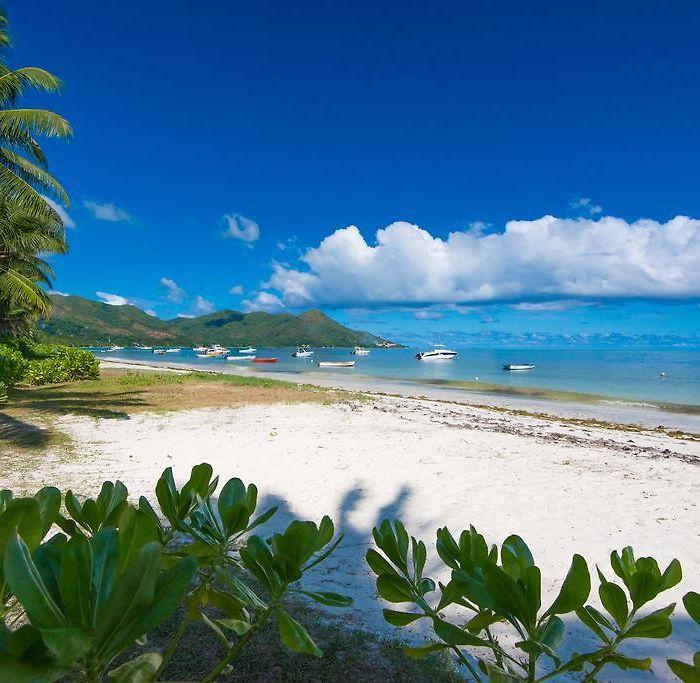 Lejligheder Og B B Seychellerne